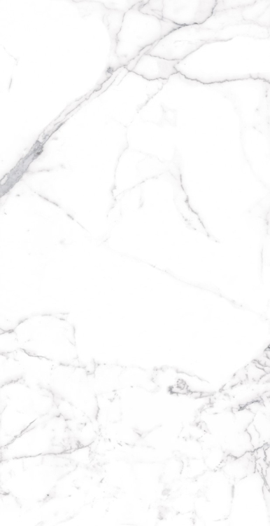 Carrara Premium Matte 12 x 24